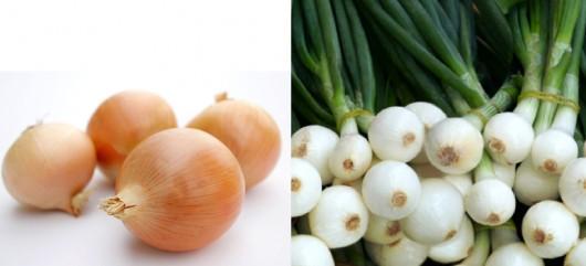 Cebolla de grano y Cebolleta fresca.